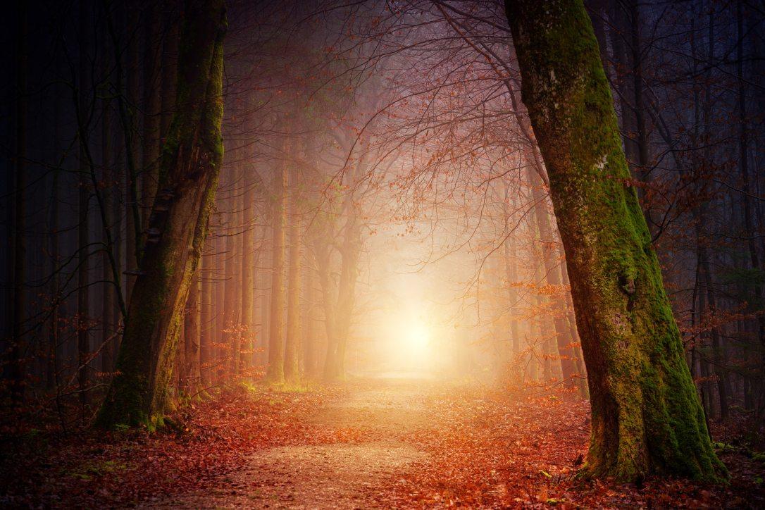 autumn-eerie-fall-1102908.jpg