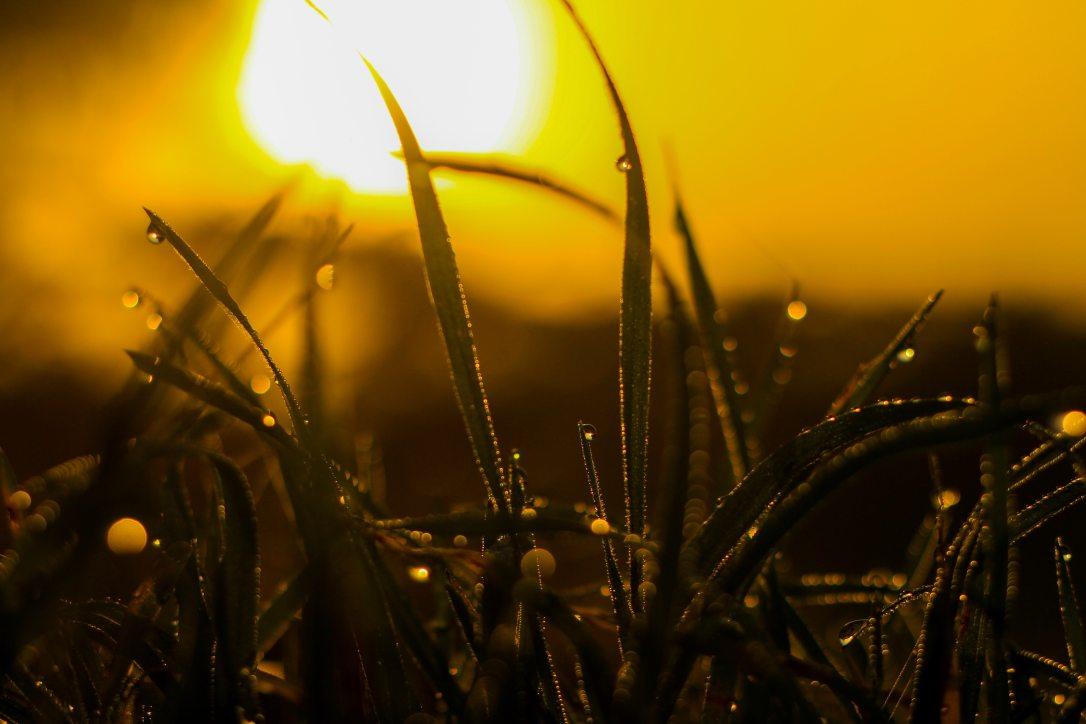 backlit-beautiful-blur-1090745.jpg