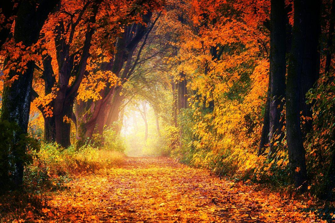 fall-forest-leaf-1114896